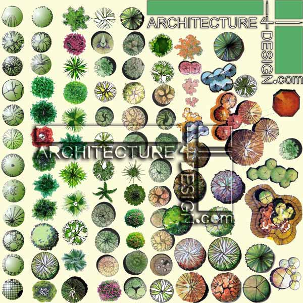 Architecture Tree Plan Trees Plan For Architectural