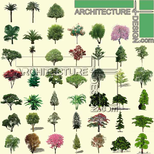 Plan And Elevation Of Trees : Trees and shrubs elevation for photoshop rendering psd