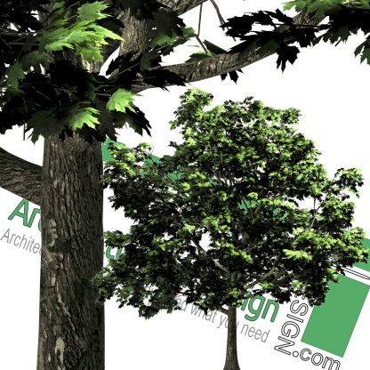 cut-out tree PNG template
