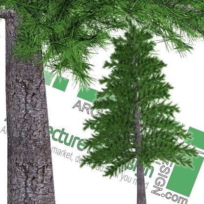 high-resolution pine tree cutout PNG