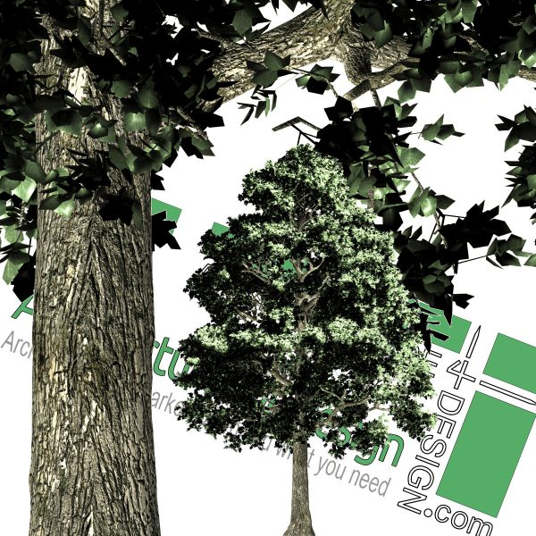 high-resolution cut-out pine PNG for download
