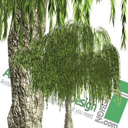 high-resolution Weeping willow tree cut-out PNG