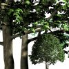 cut-out trees for download