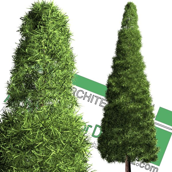 high-resolution cedar tree cut-out PNG