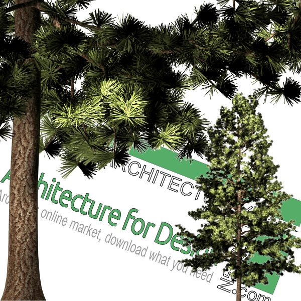 pine cut-out png