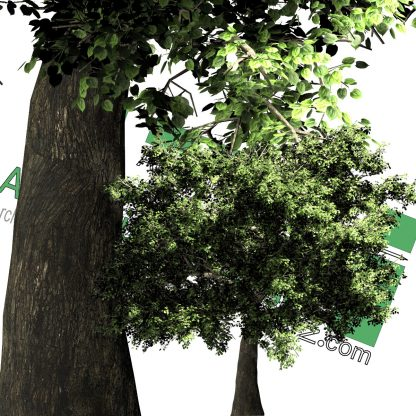 cut-out trees for photoshop