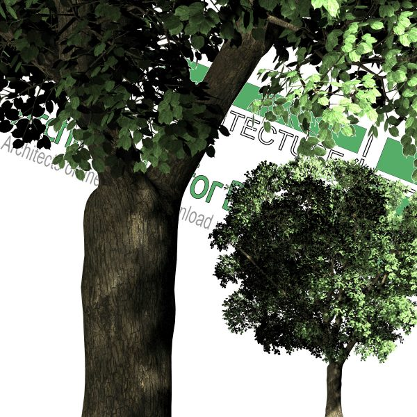 high-resolution cut-out trees for psd photoshop