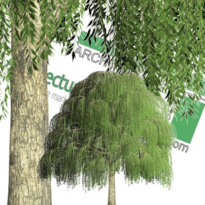 high-resolution weeping willow cut-out tree