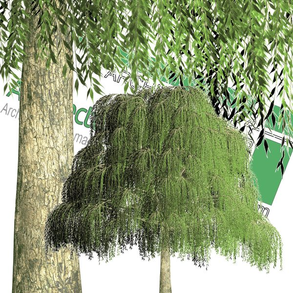 weeping willow cut-out tree PNG format