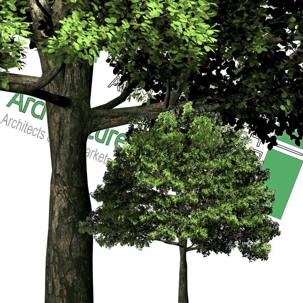 high-quality cut-out trees PNG