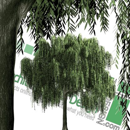 High-resolution cut_out Weeping willow tree PNG