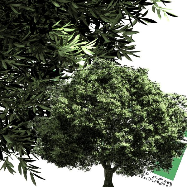 High-resolution cut_out trees PNG