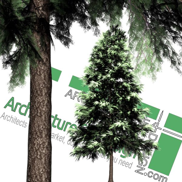 High-resolution cut_out pine tree PNG