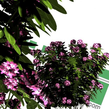 high-resolution cut-out flower bush PNG