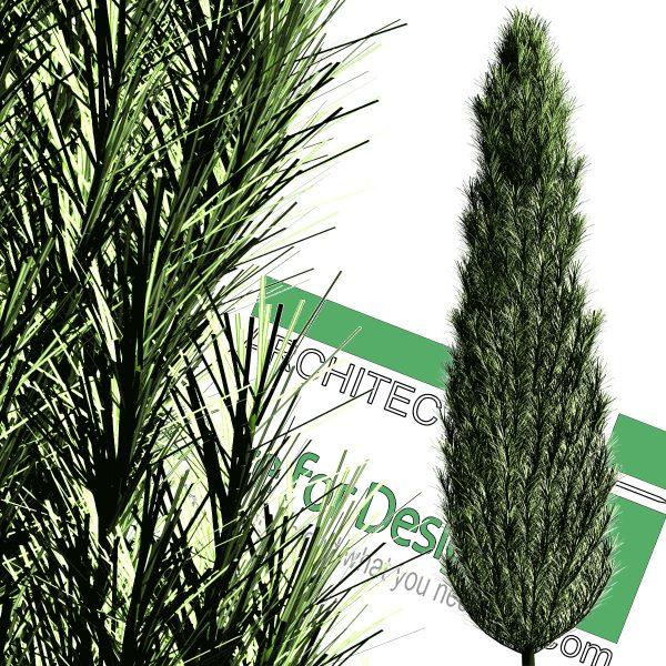 high-resolution cut-out cedar PNG