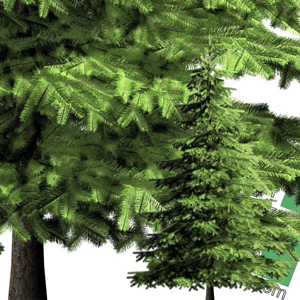 high-resolution cut-out pine