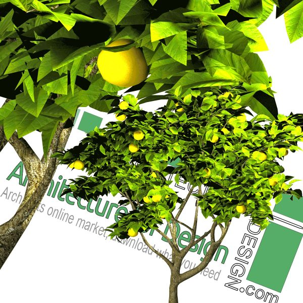 high-resolution fruit tree cut-out PNG