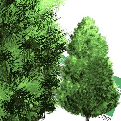 high-resolution cut-out pine PNG