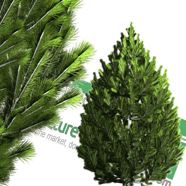 cut-out cedar tree PNG