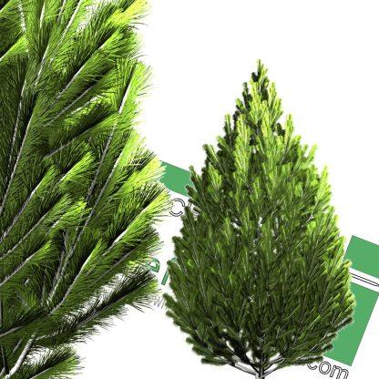 high-resolution cut-out cedar