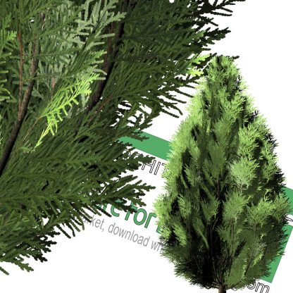 high-resolution cut-out cedar tree PNG