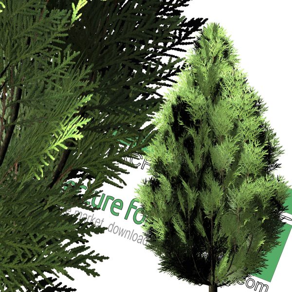 high-resolution cut-out cedar tree for download
