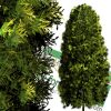 High-resolution cut_out cedar tree PNG