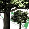 high-resolution png cut-out trees