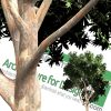 high-resolution cut-out PNG tree