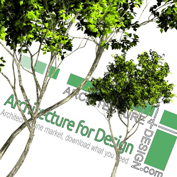 high-resolution tree cut-out PNG