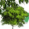 high-resolution cut-out tree PNG