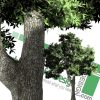 high-resolution PNG trees for Photoshop