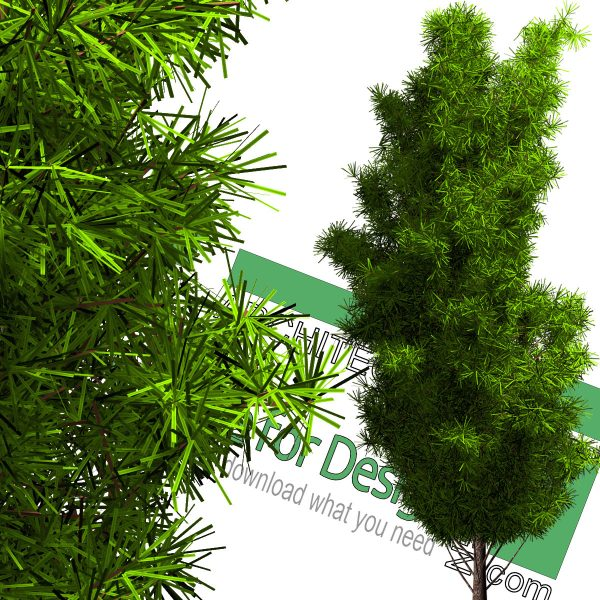 high-resolution pine tree cut-out PNG