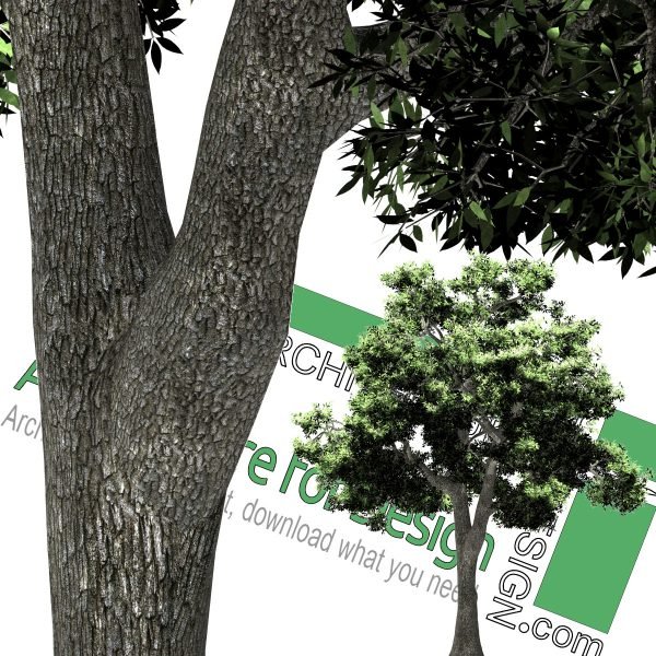png cut-out tree