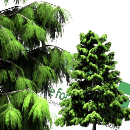 pine tree cut-out png