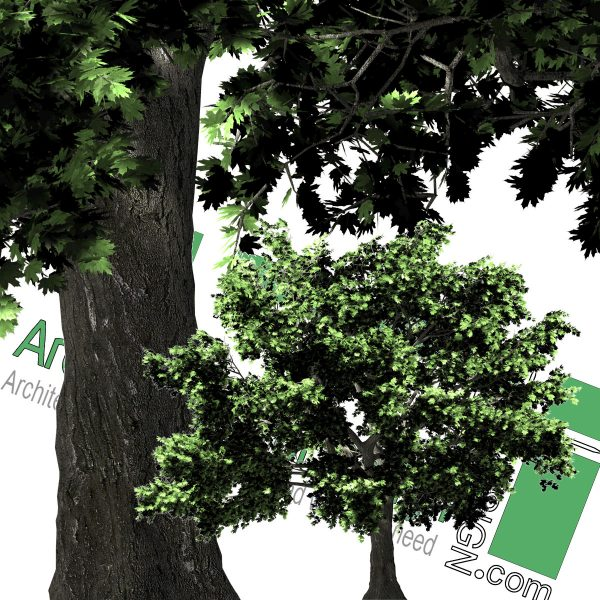 high-resolution png cut-out trees in front view