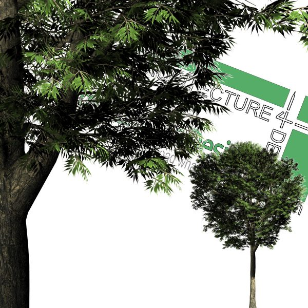 large cut-out trees for photoshop