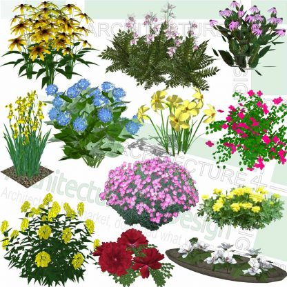flowering plants SketchUp models
