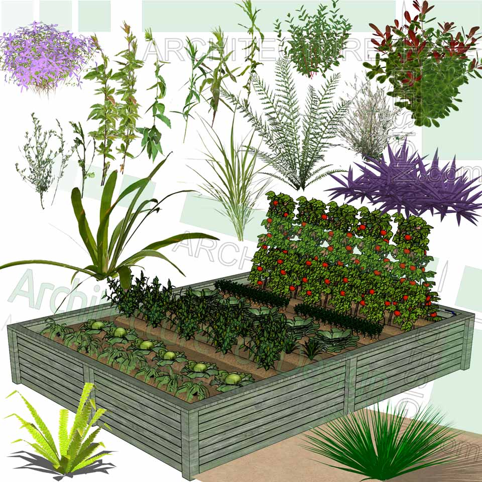 Trees, shrubs and flowering plants Sketchup models, Free ...