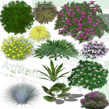 Shrubs SketchUp 3D models
