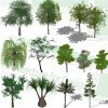 Willow trees SketchUp models