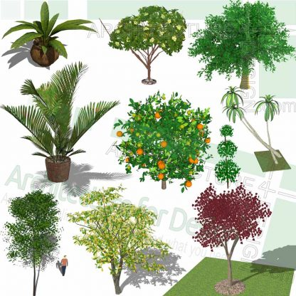trees SketchUp models