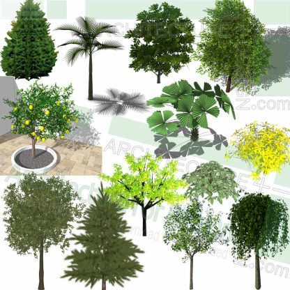 tropical trees SketchUp models